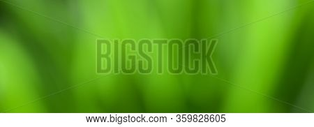 Panoramic Green Nature Blurred Background. Abstract Beautiful Spring Summer Background. Defocused Gr