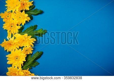 Beautiful Orange Chrysanthemums Lie On A Blue Background.