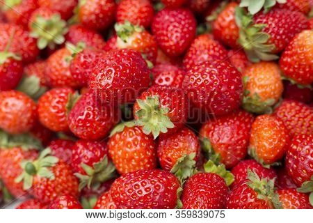 Strawberry Has Traditionally Been A Laxative, Diuretic And Astringent Popular Remedy. Fragaria