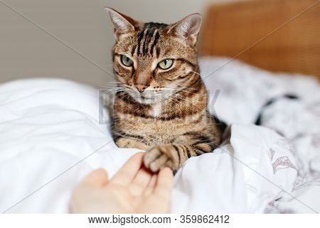 Man Giving Open Empty Hand Palm To Tabby Cat. Woman Touching Cats Paw As Sign Of Support, Compassion