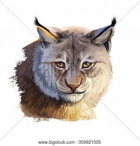 Eurasian Lynx Medium-sized Wild Cat From Europe, Central Asia And Siberia. Digital Art Illustration
