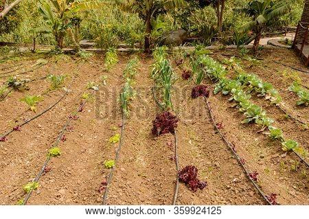 Nice Ecological Orchard In The Valley In La Hermigua On La Gomera. April 15, 2019. La Gomera, Santa