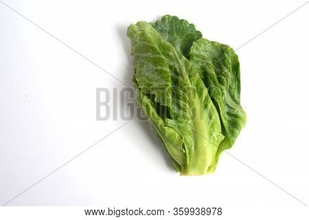 The Brussels Sprout Is A Member Of The Gemmifera Group Of Cabbages (brassica Oleracea), Grown For It