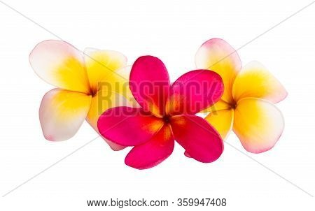 Frangipani Beautiful Flower Isolated On White Background
