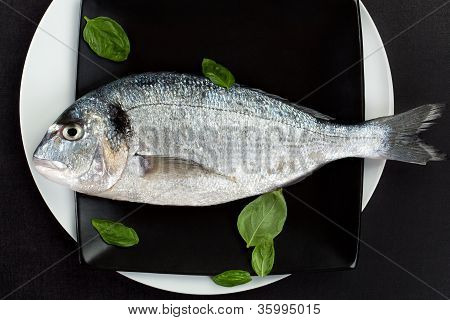 Fresh sea bream on black plate with fresh basil leaves top view. Luxurious culinary seafood concept in black and white. poster