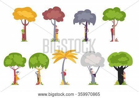 People Standing Behind Trees, Men And Women Hiding And Peeking Behind Tree Trunks Vector Illustratio