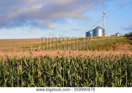 Corn Field On Sunny Day With Silos In Background