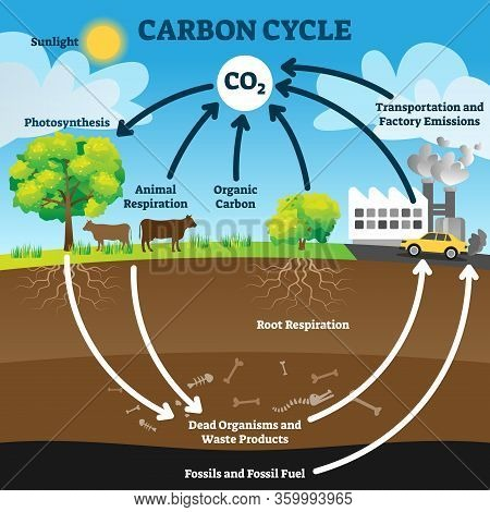 Carbon Cycle Vector Illustration. Labeled Co2 Biogeochemical Process Scheme. Educational Exchange Di