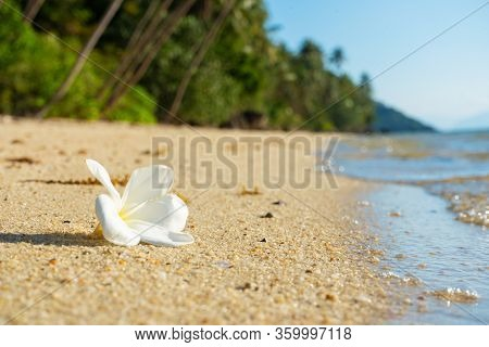 White Tropical Frangipani Flower On A Deserted Beach. Paradise Tropical Island Oceanfront