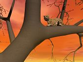 Panther sitting on the branch of a tree by sunsetorange light poster