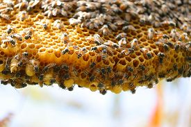 Close Up Of Honey Bees Working On Yellow Honeycomb With Selective Focus Points Backgrounds,abstract
