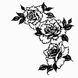 Set Of Three Roses With Leaves. Beautiful Graphic Flowers Black Ink Hand Drawn For  Frames, Posters,