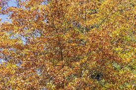 Autumn Trees Leaves Changing Color With The Season
