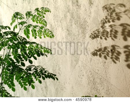 Leaves With Its Shadow