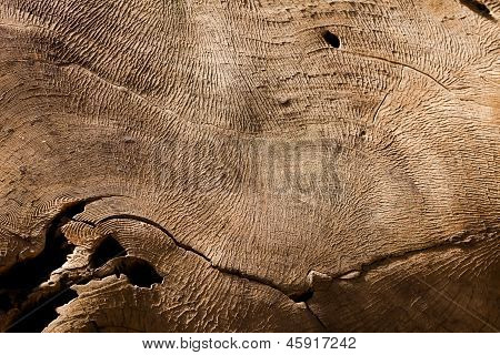 Sequoia Tree Stump Pattern