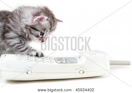 Cat and wireless phone handset - Isolated on white background