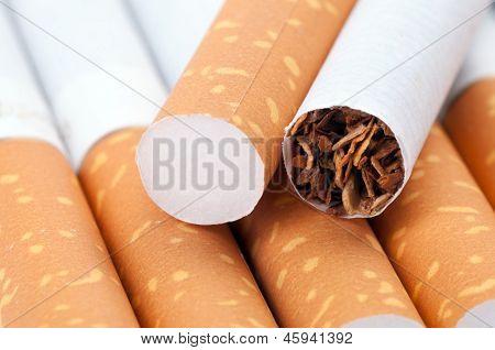 Tobacco In Cigarettes Close Up