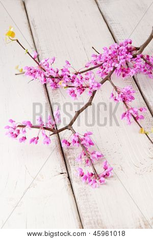 Redbud Twig With Blossoms