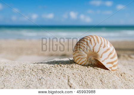 kleine Meeresschnecke mit Meer, Strand und seelandschaft, shallow dof
