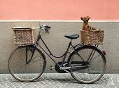 Detail of a parking bicycle with two basket with a chihuahua little dog inside of one of them poster