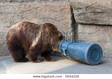 Bear And Trash Can