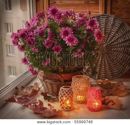 Flashlights And Chrysanthemums Bush In The Window