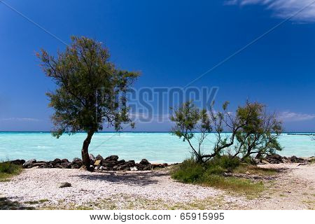 Lonely Trees , tropical sea in the summer time