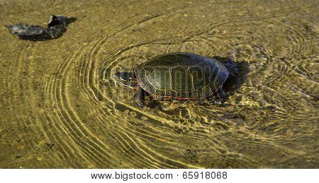 High Speed Turtle
