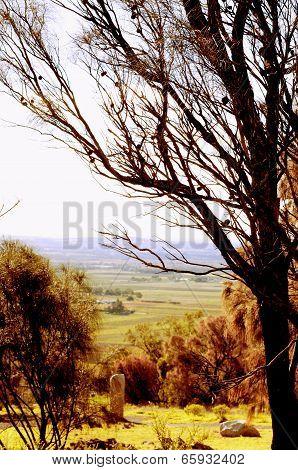 Retro Sunset Filter Style Scenic Views Overlooking Barossa Valley, South Australian Prominent Wine G