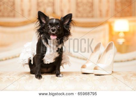 Funny Dog Of The Bride In A White Wedding Dress