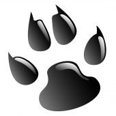 Illustration animals paws print on a white background. poster