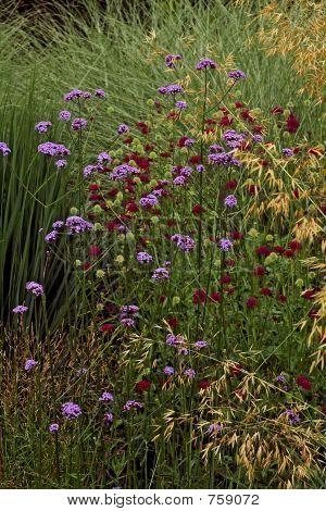 Prairie planting