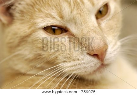 CLOSE-UP OF CATS FACE