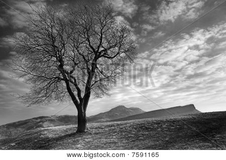 Tree with Arthur's Seat and crags