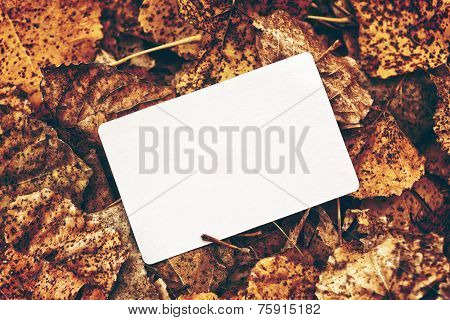 Old Blank Business Card In Autumn Leaves