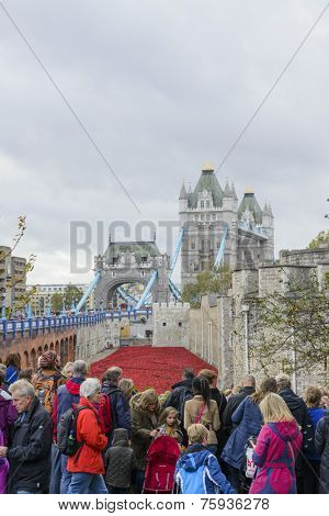 LONDON, UK - NOVEMBER 08: Crowd admiring art installation by Paul Cummins at Tower of London. November 08, 2014 in London. The ceramic poppies were planted to mark the centenary of WWI's outbreak.