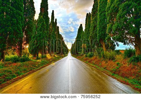 Bolgheri famous cypresses trees straight boulevard landscape. Maremma landmark Tuscany Italy Europe. This boulevard is famous for Carducci poem. poster