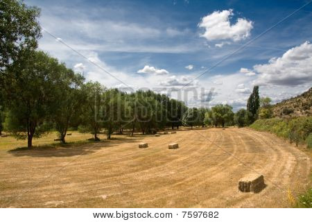 The Harvested Field