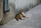 A wild street kitten relaxes in a yard in Mostar poster