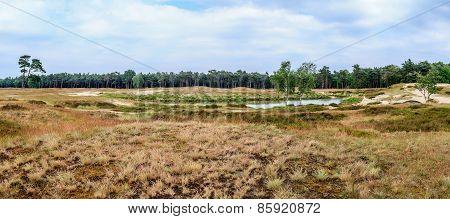 Panorama Of Dutch Heathland