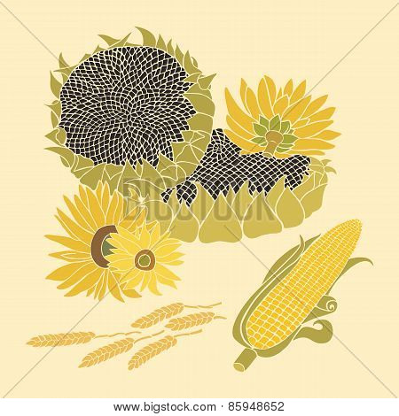 Greeting card with composition of sunflower, corn and ears