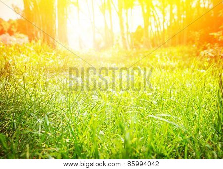 Fresh green grass field with bright sun light, sunny day in spring park, nature background, beautiful sunrise in the forest, selective focus