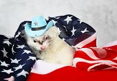 Little cute ferret in a cowboy hat on the USA flag background poster