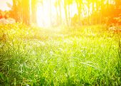 Fresh green grass field with bright sun light, sunny day in spring park, nature background, beautiful sunrise in the forest, selective focus poster