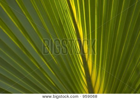 close up image of a palm freon poster