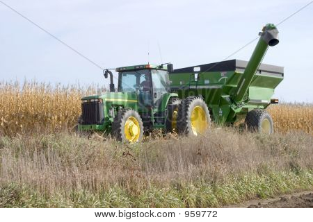 Bringing In The Corn 3420