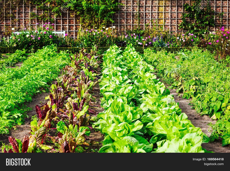 vegetable garden late image  u0026 photo  free trial