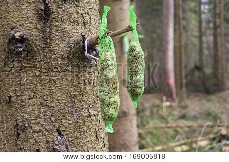 Bird food in a sachet. Bird food hangs on a tree