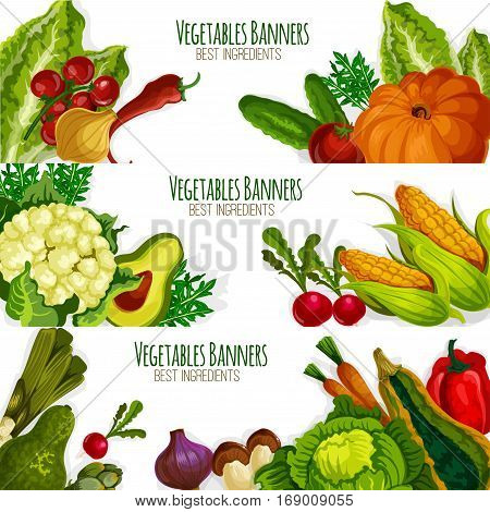 Vegetables banners of vector veggies avocado, cauliflower and asparagus, radish daikon, broccoli, bell and chili pepper, corn and garlic, zucchini squash and beet, pumpkin, green onion leek and eggplant. Vector farm fresh vegetarian organic food