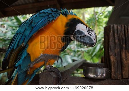 Macaw Parrot Sitting On A Branch, A Powerful Beak,feathers